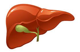 lo relativo al higado es lo hepatico
